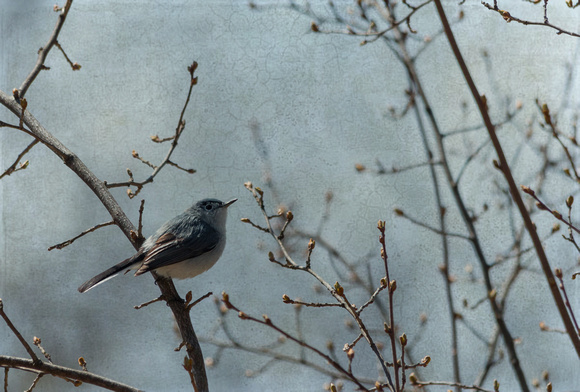 Bird in the Bush - Partners Pick Award at ICPG