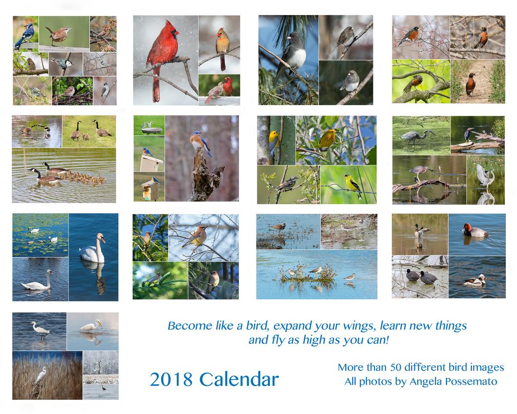 2018 Calendar - Birds!