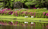 "The Garden Club of America has called the 65 acres ""the most important and most interesting garden in America""."