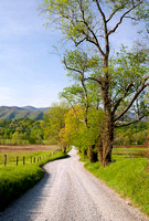 Sparks Lane in Cades Cove